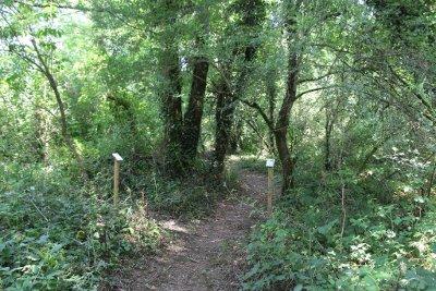 Le sentier botanique