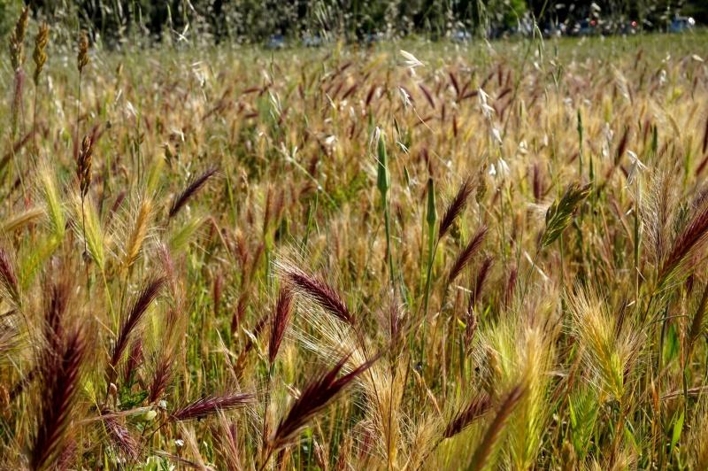 L'agroécologie est une discipline scientifique visant à implémenter les connaissances en écologie dans l'agriculture pour la rendre plus respectueuse de l'environnement.