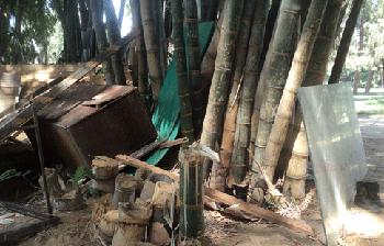 Les tiges de bambou, coupées pour être utilisées au montage des tentes du sit-in. Photo Doaa Elhami