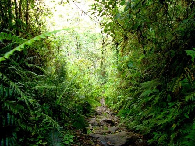 Les forêts tropicales renferment une biodiversité exceptionnelle. Il y a en effet plus d'espèces végétales dans 1 seul hectare de forêt amazonienne que dans toute la France !