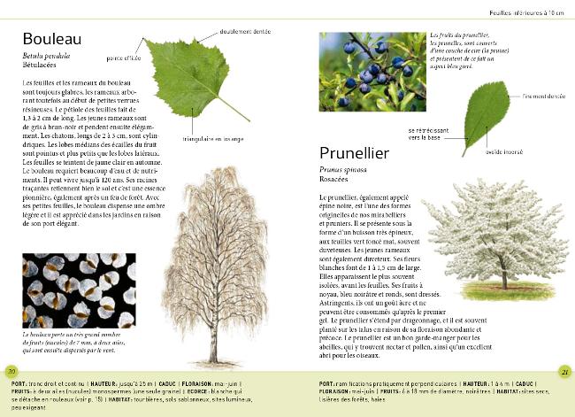 reconna tre facilement les arbres par leurs feuilles. Black Bedroom Furniture Sets. Home Design Ideas