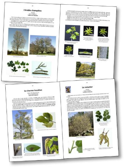 Dictionnaire Visuel Des Arbres Et Des Arbustes Communs