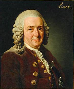 C.V. Linné wikimedia commons