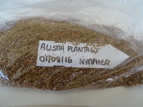Conditionnement des semences dans un sachet plastique