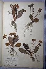 Planche de l'Herbier Guittot
