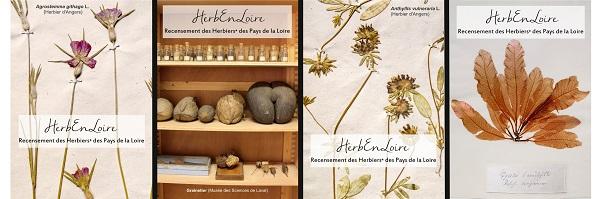 Collections Botaniques