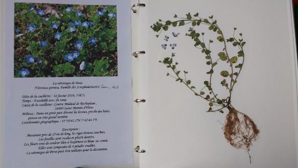 Exemple d'herbier