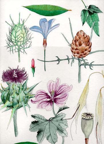 Flore méditerranéenne de Clémence Guiller, Vigie-floriste