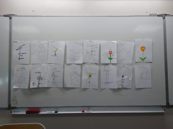Dessins de plantes réalisés par des élèves du collège des Garrigues dans le cadre d'une intervention des Ecologistes de l'Euzière et de Tela Botanica