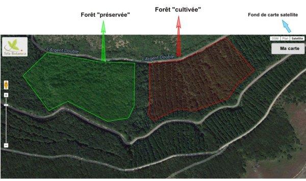 Identifier les bois préservés