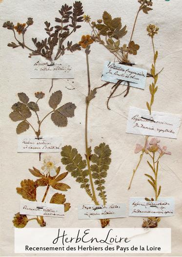 Planche d'Herbier
