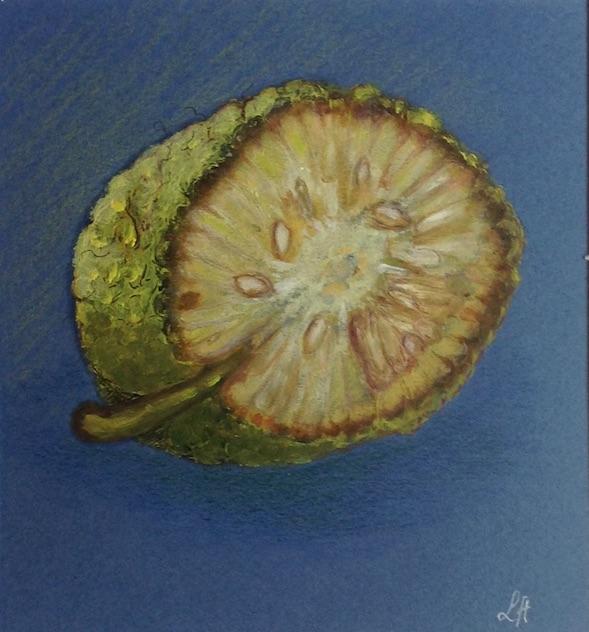 Fruit de Maclura pomifera. Huile sur papier de Line Hermet, 3 décembre2016