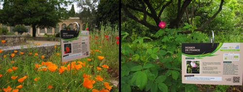 Panneaux des Espèces Plantes Médicinales aux Jardins des Plantes de Montpellier