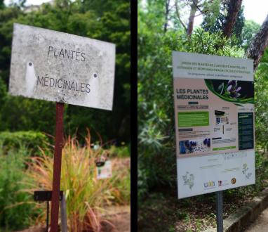 Le Jardin de Montpellier fondé depuis 1593: déjà les plantes médicinales étaient enseignées