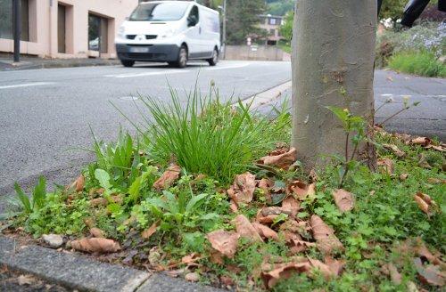 Plaidoyer pour la végétation spontanée dans nos cités