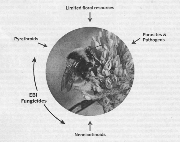 Facteurs de stress conduisant au déclin des abeilles (in Science, 25 mars 2015, vol 347)