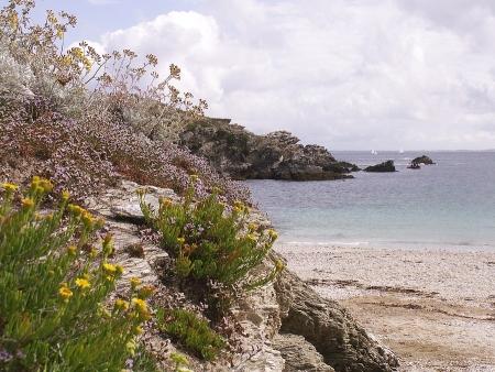 Inule fausse criste - Inula crithmoides subsp. crithmoides par Valérie BRUNEAU-QUEREY