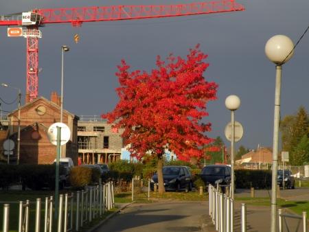 Érable champêtre - Acer campestre L. par Jean-Patrice MATYSIAK