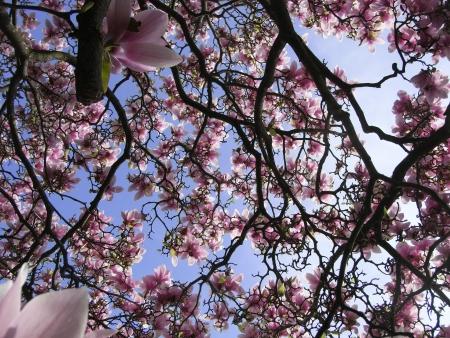 Magnolia par Annie GIROUD