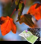 La Géolocalisation de votre sentier botanique Smart'Flore est maintenant à votre portée !