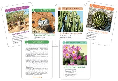 Jeu de cartes des 7 familles terra seca sur les cact es for Commander des plantes