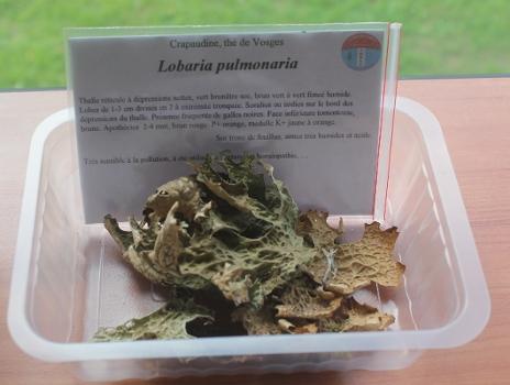 Présentation d'échantillons de lichens corticoles lors des sessions de formation (photo : Marine Piana - CBNMC)