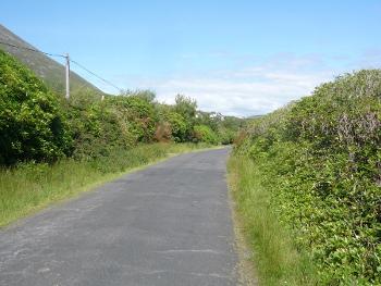 Envahissement de Rhododendron ponticum et Fuchsia magelanica aux abords d'une route du littoral