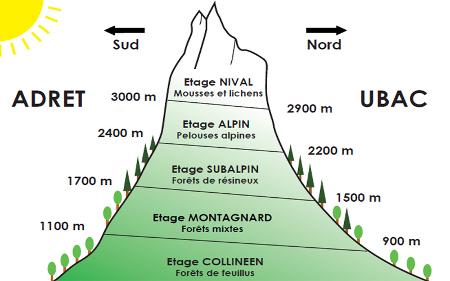 <em>image du site www.jardinalpindulautaret.fr</em>«/><figcaption><em>image du site www.jardinalpindulautaret.fr</em></figcaption></figure> <p>En savoir plus sur l'étagement et l'adaptation de la végétation en montagne sur <a href=