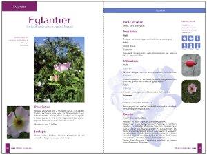 """<em>Exemple de pages intérieures</em>«/><figcaption><em>Exemple de pages intérieures</em></figcaption></figure> <h2>Un livre pratique avant tout</h2> <p>L'ouvrage est conçu avant tout comme un guide pratique.<br /> L'auteur nous explique comment reconnaître les plantes médicinales, les récolter, les sécher et<br /> les stocker. Ensuite, il nous apprend à les transformer et les utiliser.<br /> La seconde grande partie de l'ouvrage est consacrée aux fiches descriptives de plantes.<br /> Si Vincent Delbecque les a toutes dénichées sur les chemins du Nord-Pas-de-Calais, comme il l'explique dans l'introduction de l'ouvrage, la majorité d'entre elles poussent bien sûr aussi aux<br /> quatre coins de France.<br /> Chaque fiche est <strong>richement illustrée</strong> de superbes photos en couleur, et contient de nombreuses informations précises.<br /> Enfin, le livre est complété par un tableau des propriétés, un lexique botanique, un lexique<br /> médical et une bibliographie pour en apprendre plus.<br /> Armé du livre de Vincent Delbecque, chacun est à même de se constituer aisément sa propre<br /> pharmacie de plantes médicinales.</p> <p>L'auteur.<br /> <strong>Vincent Delbecque est pharmacien et botaniste</strong>, diplômé<br /> de la Faculté de Pharmacie de Lille et de l'Ecole des<br /> Plantes de Bailleul. Il enseigne depuis plusieurs années<br /> l'utilisation des plantes médicinales sauvages et réalise<br /> de nombreuses publications sur le sujet.</p> <p><em>Informations pratiques :</em><br /> <strong>Plantes Médicinales du Nord-Pas-de-Calais,<br /> de Belgique et des régions limitrophes</strong><br /> Vincent Delbecque<br /> Editions Savoirs de Terroirs, 2010<br /> Collection «guide des savoirs»<br /> <em>31 fiches de plantes, 31 recettes,<br /> 100 photos couleurs</em><br /> <em>Prix indicatif :</em> 21 euros</p> <p><strong>Pour se procurer l'ouvrage :</strong><br /> A commander, avec votre règlement (21 euros + 3 € de frais de port), auprès de : """"Nature à lire"""""""
