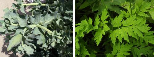 Comparaison des feuilles