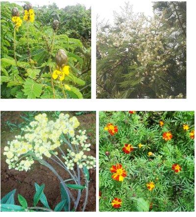 quelques fleurs du mont oku à 3011 m. d'altitude
