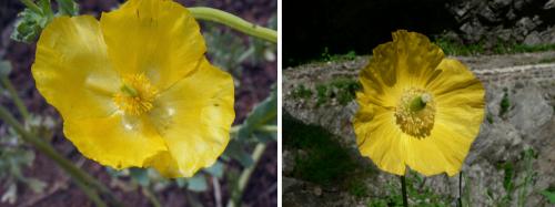 Comparaison des fleurs