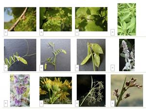 <strong>Le CEL inaugure sa gallerie, 2011</strong>«/><figcaption><strong>Le CEL inaugure sa gallerie, 2011</strong></figcaption></figure> <p>Le Carnet en ligne (CEL) permet de lier des photos à ses observations botaniques. Une fois celles-ci transmises au site elles constituent <a href=