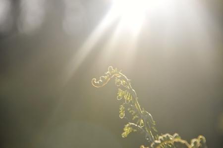 Pteridium aquilinum par David DIGAIRE