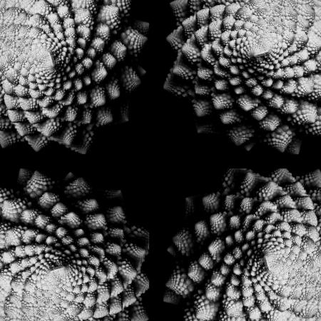 Brassica oleracea Romanesco par Joan TOSI