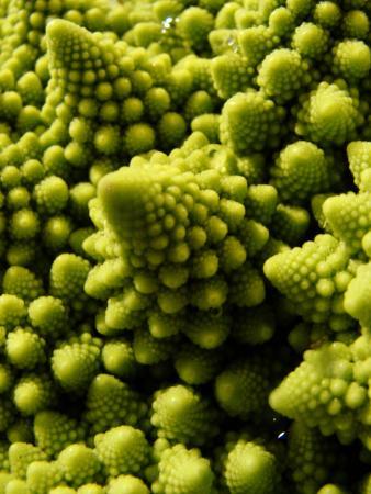 Brassica oleracea 'Romanesco' par Ludovic SALOMON