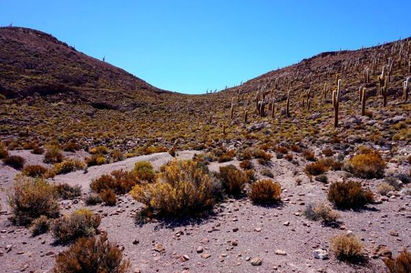 Photo 2 - Végétation classique de ce milieu aride composée de patchs de plusieurs plantes facilitatrices