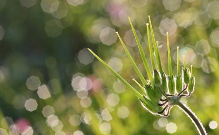 Erodium moschatum (L.) L'Hér. par Gilles SALAMA