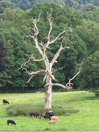 Quercus sp. par Laurence FAYET