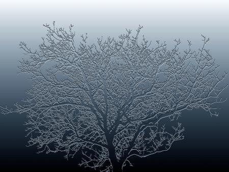 Arbre en hiver par René BRENGUIER