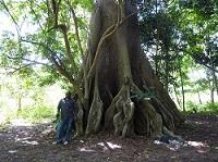Visite de quelques hauts lieux de la botanique ivoirienne for Bingerville jardin botanique