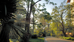 Livres anciens de la villa thuret inra antibes en ligne for Jardin villa thuret antibes