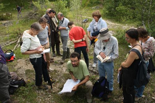 Sortie botanique en juillet 2012 à Souzay-Champigny - photo prise par Emilie Vallez