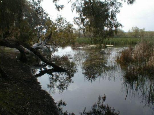 Le lac TONGA - Parc national d'El-Kala