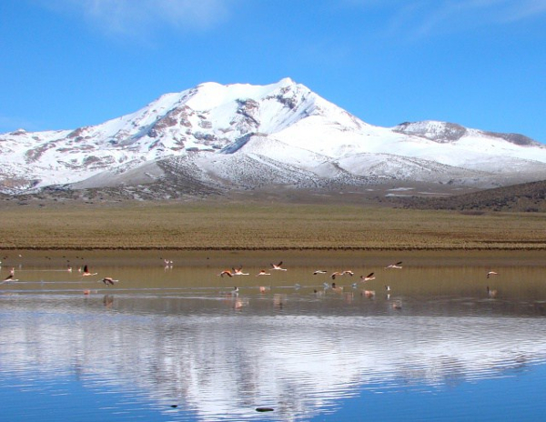 Parc national du Sajama, Bolivie
