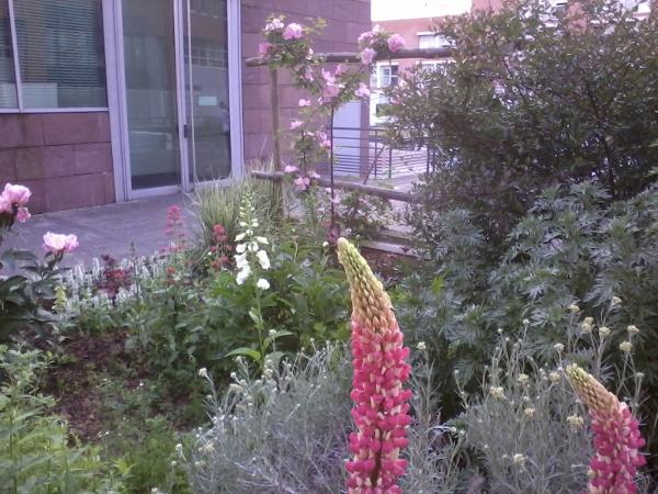 le jardin pépinière
