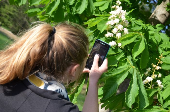 Image d'identification de plantes par smartphone