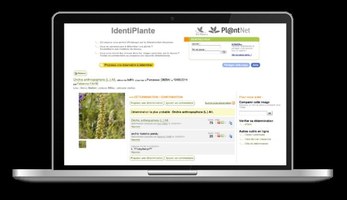 identiplante, determination floristique collaborative