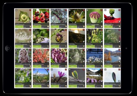 images de plantes