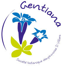 logotype Gentiana